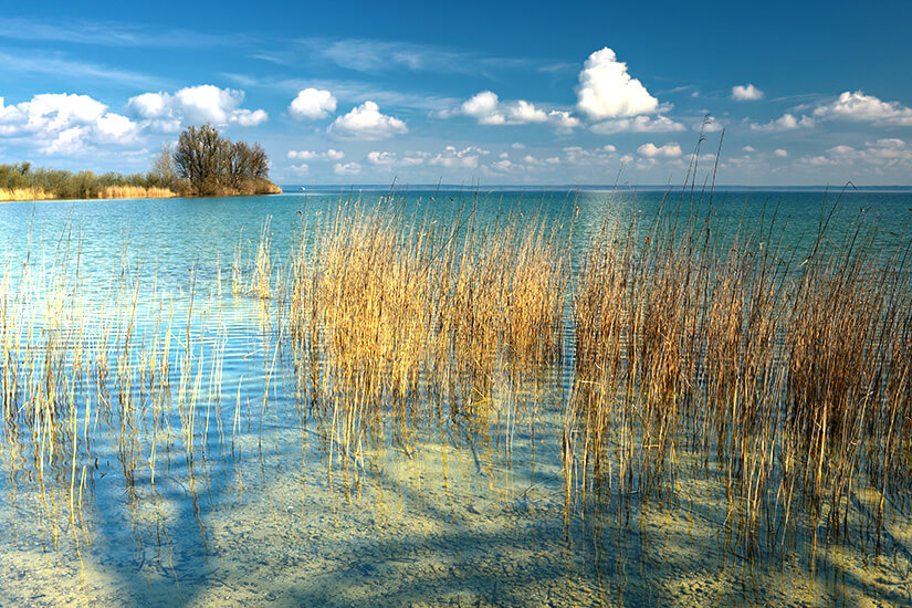 Unberührtes Ufer im Nationalpark Müritz