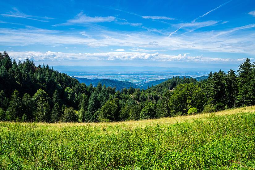 Schwarzwald nahe Freiburg