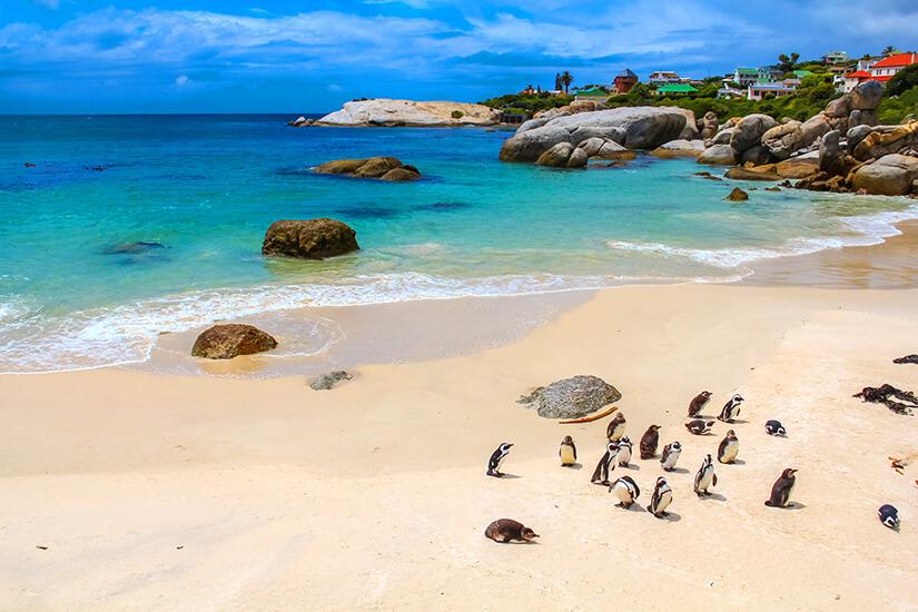 Simons Town mit Pinguinen