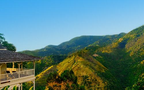 Regenwald & Kaffee in den Blue Mountains