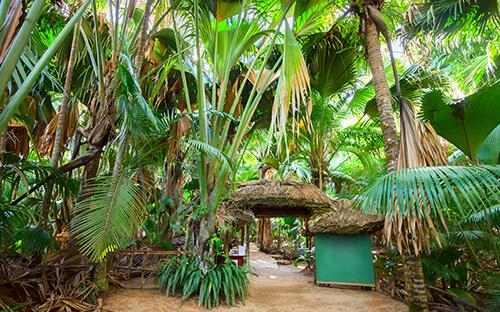 Nationalpark Vallée de Mai & Coco de Mer