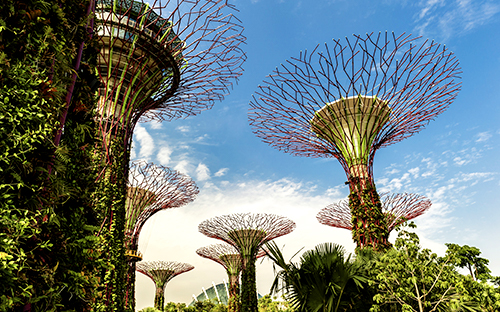 Supertrees im Gardens by the Bay