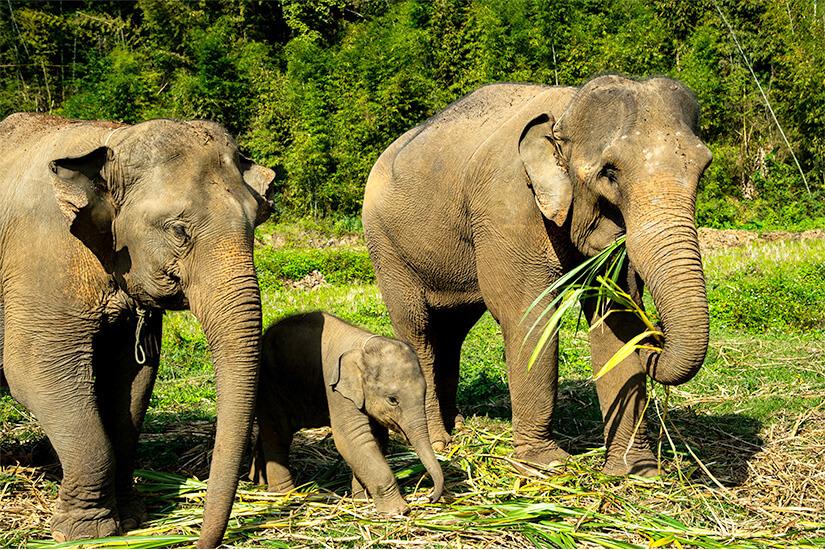 1570778709_Elefanten