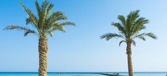 Soma Bay: Paradies am Roten Meer