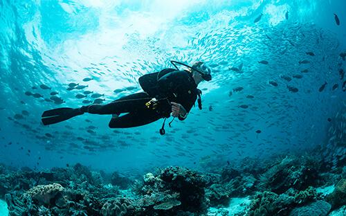 Schnorcheln zum Korallenriff vor Tiran