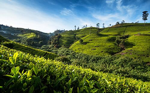 Hochland & Teeplantagen um Nuwara Eliya
