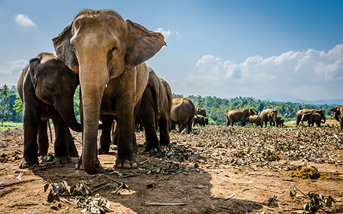Elefantenaufzuchtstation in Udawalawe