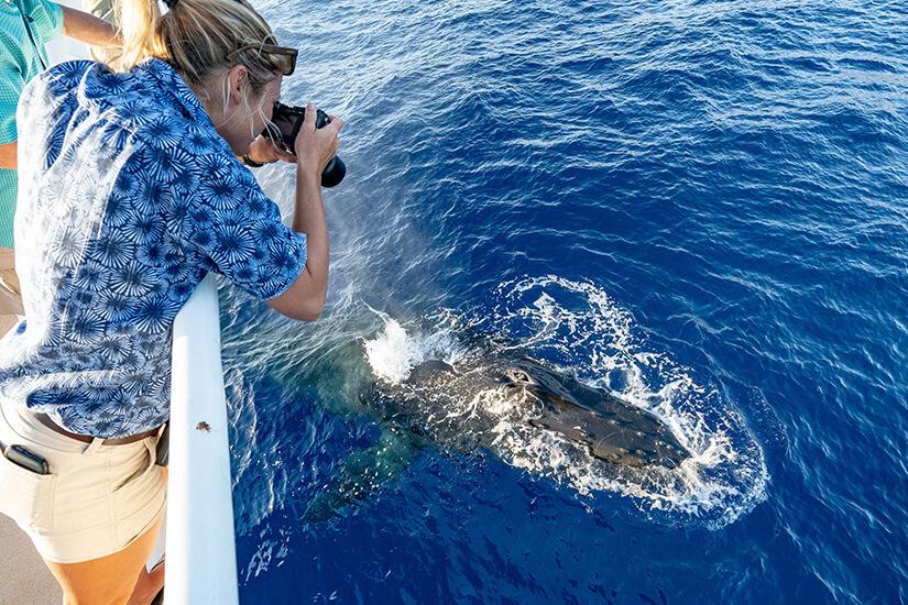 Whale Watching vor Hawaii