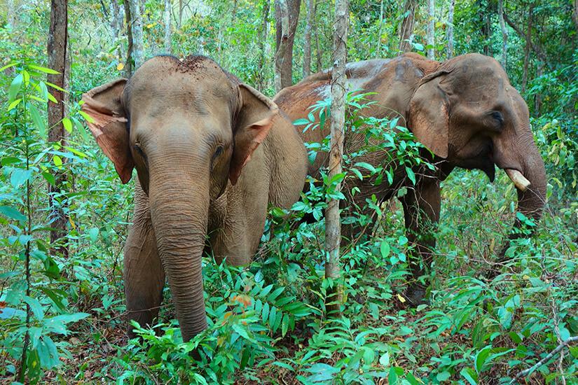 1571829538_Elefanten