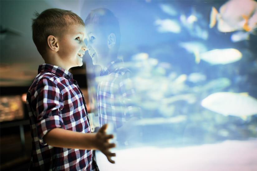 Fische beobachten im Aquarium