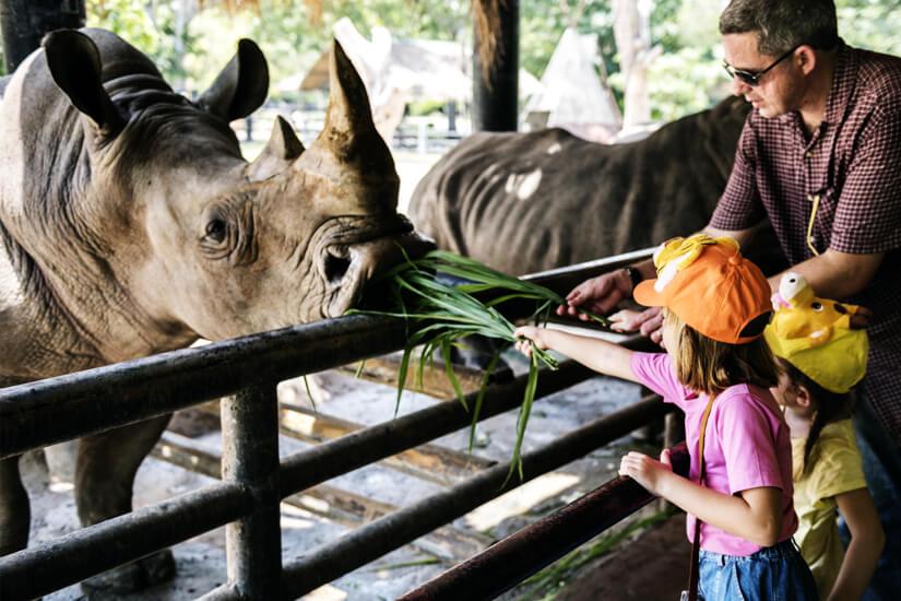 Nashörner füttern im Zoo
