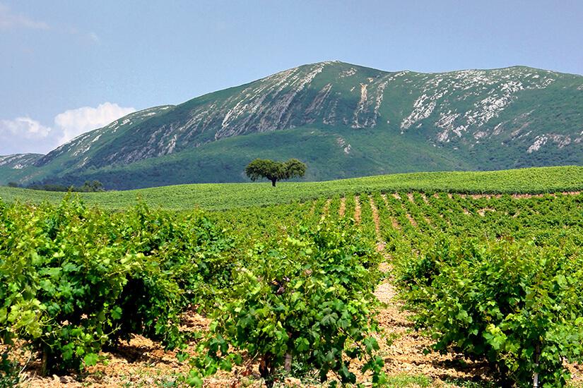 1573655794_Arrábida-Wine