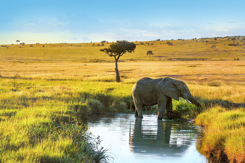 Masai Mara Nationalpark in Kenia