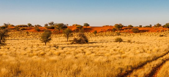 Rundreise: Kalahari & Sossusvlei