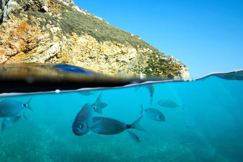 Unterwasserwelt vor den Medas-Inseln
