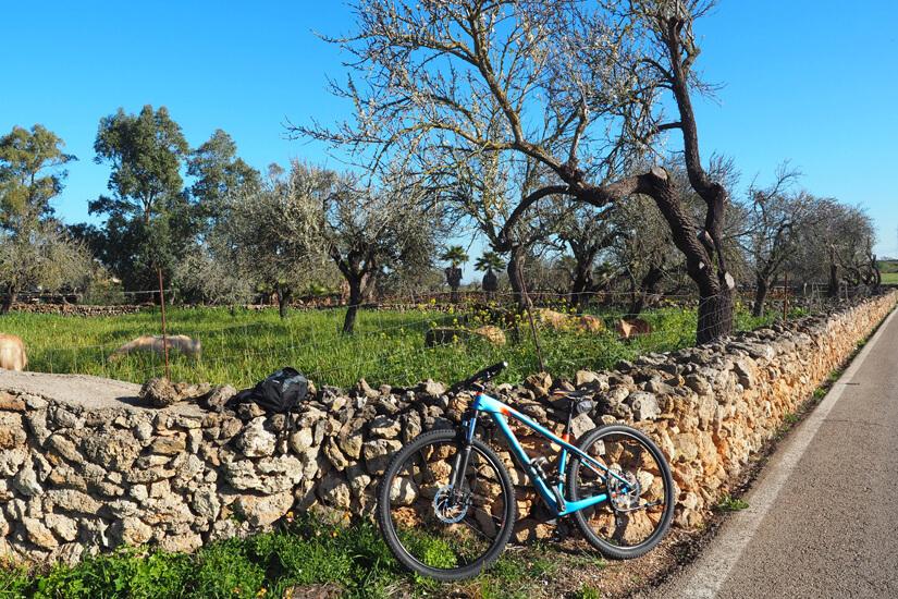 Mit dem Fahrrad über die Insel