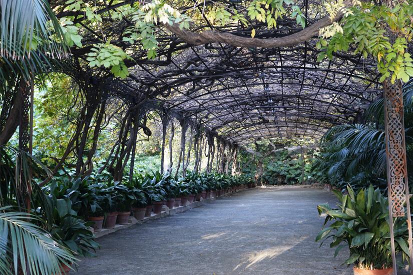 Pergola durch den botanischen Garten