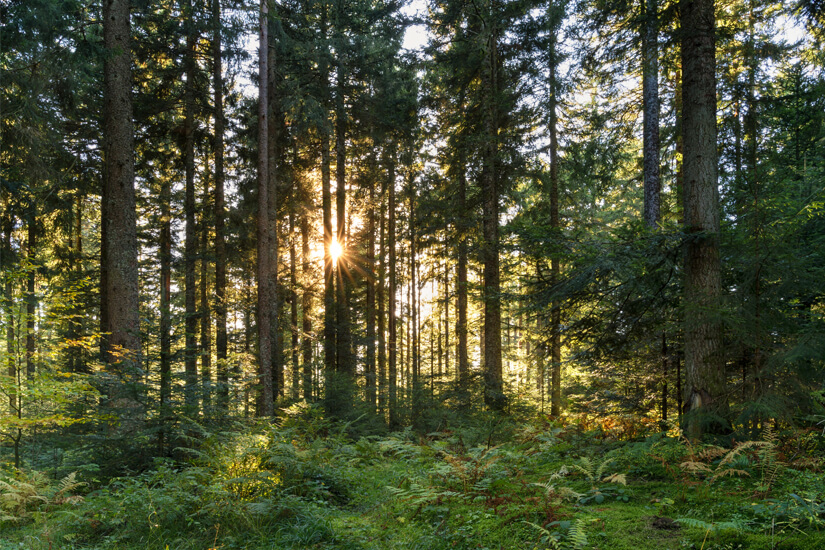 Mittten im schwarzwald