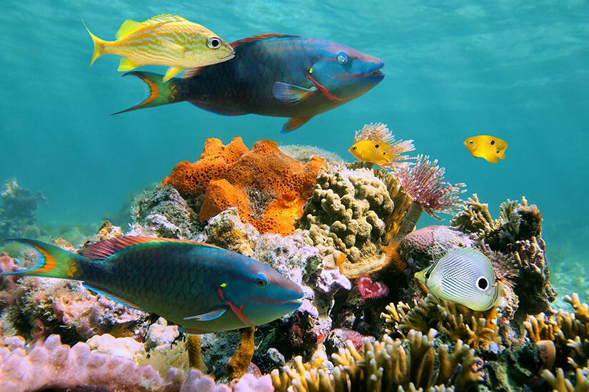 Unterwasserwelt der Karibik