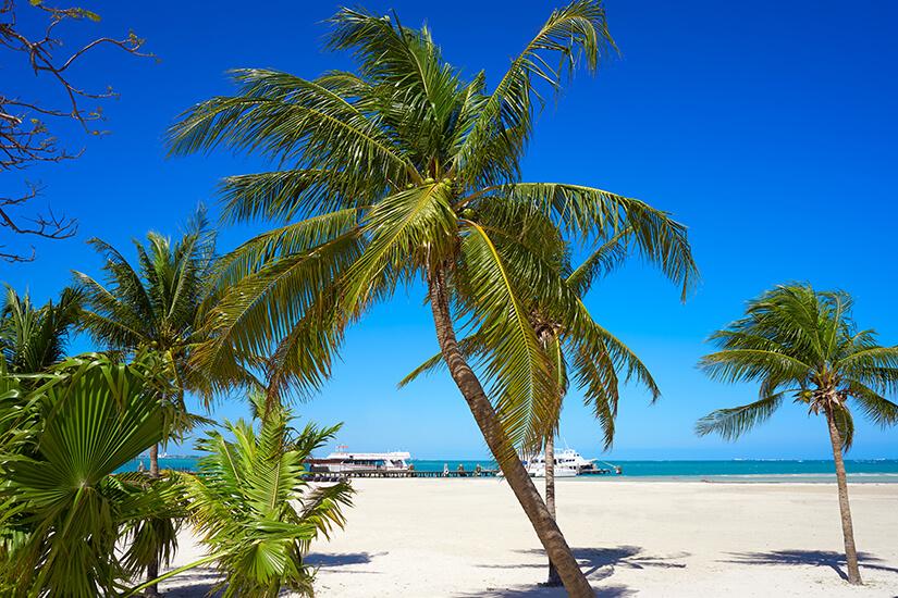 Palmen am Playa Langosta in Cancun