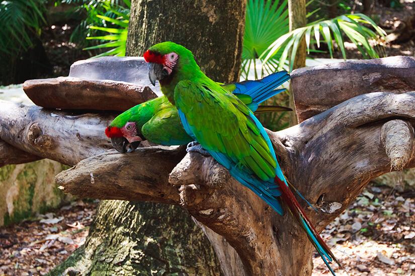 Papageien im Xcaret Park