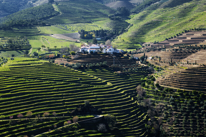 Terrassenförmiger Weinanbau im Alto Douro