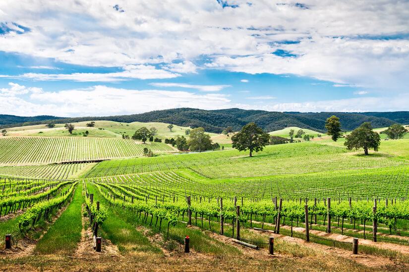 Barossa Valley in Australien