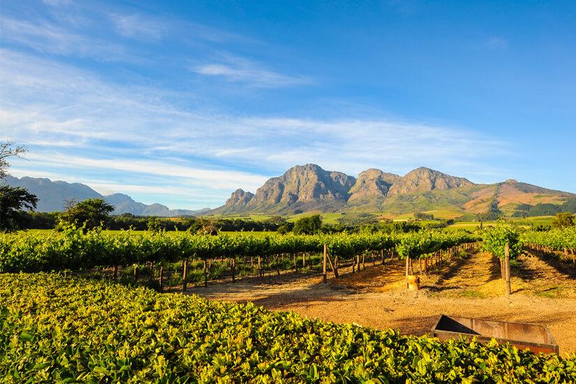Weinanbau in Stellenbosch in Südafrika