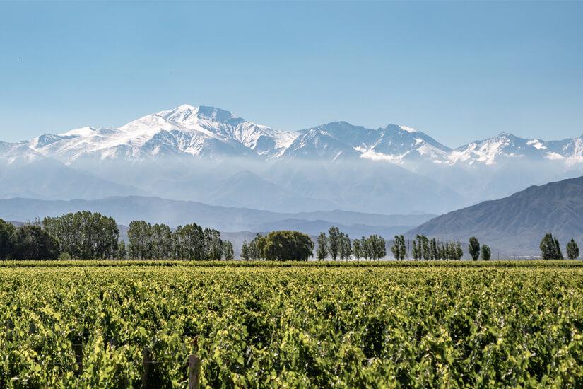 Weinanbaugebiet Mendoza in Argentinien