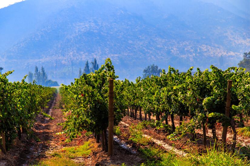 Maipo Valley in der Nähe von Santiago de Chile