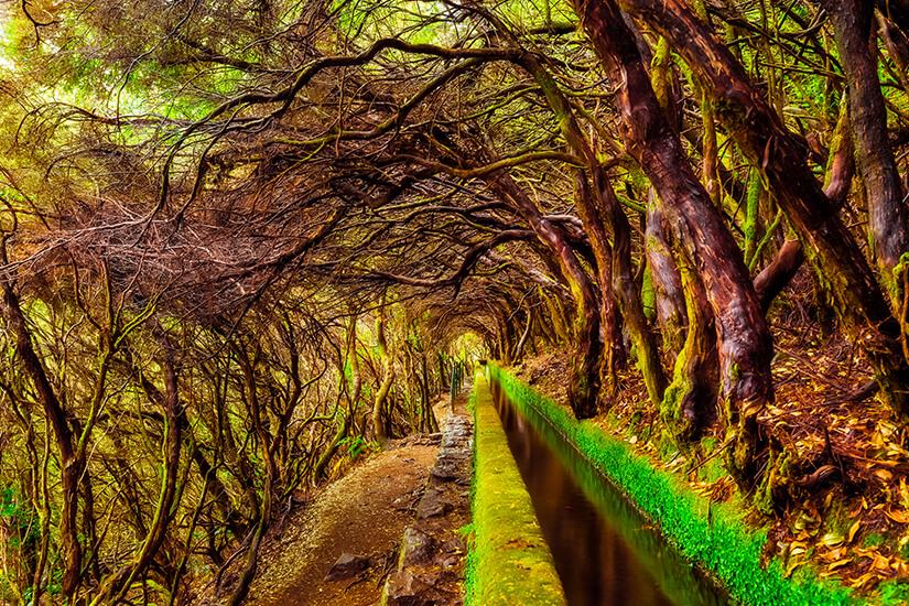 Eine der Levadas auf Madeira