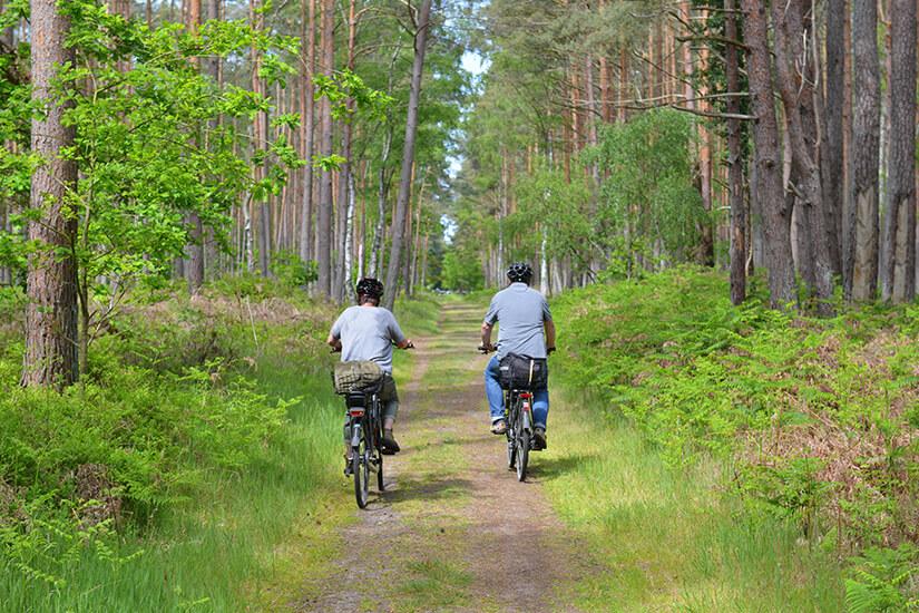 Radfahren im Darßwald