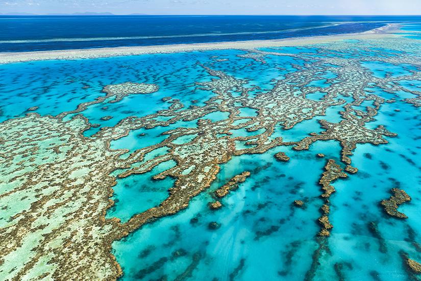 Das Great Barrier Reef ist in Gefahr