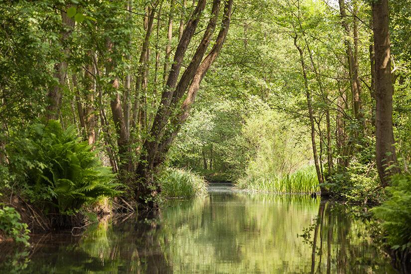 Spreewald UNESCO Biosphaerenreservat