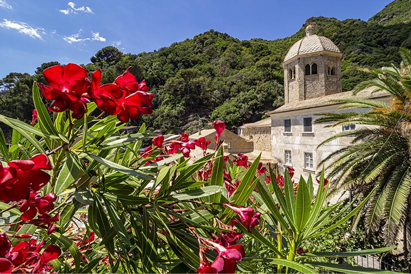 Blumenpracht in San Fruttuoso