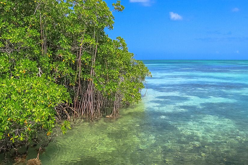 Mangroven auf der Isla Saona im Parque Nacional del Este