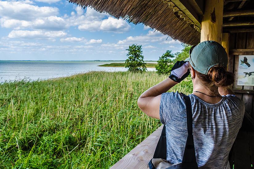 Vogelbeobachtung im Nationalpark Mueritz