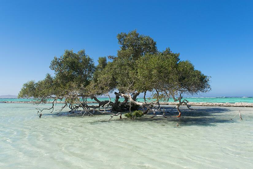 Mangroven im Wadi El Gemal Nationalpark