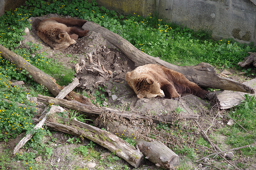 Baeren im Tierpark Bern