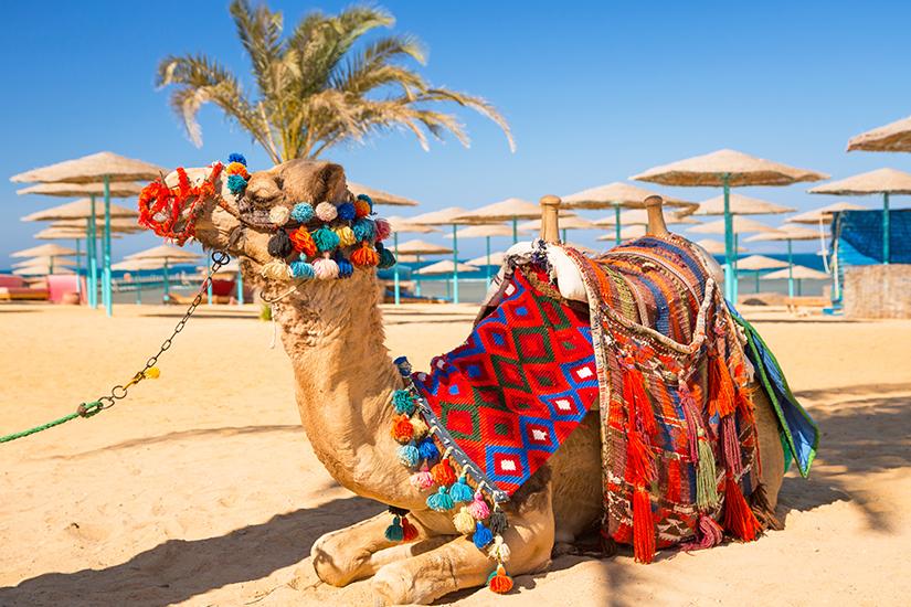 Kamel am Strand von Hurghada