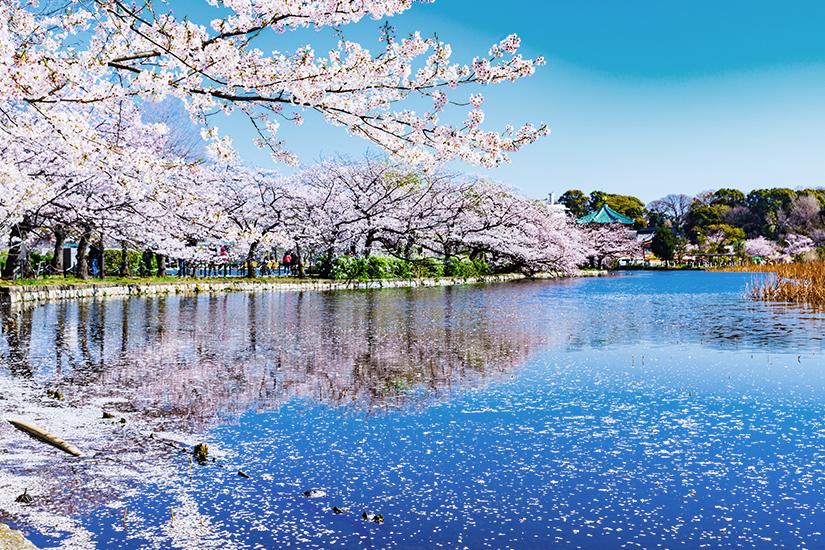 Ueno Park in Tokio