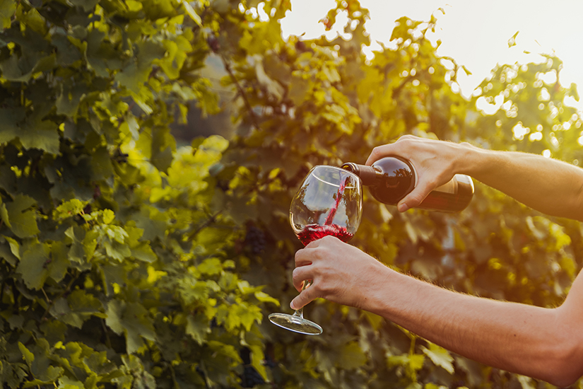 Weinverkostung an der Rebe