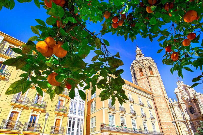 In Valencia wachsen Orangenbaeume