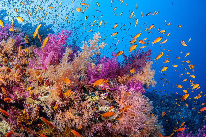Unterwasserwelt in Ras Mohammed