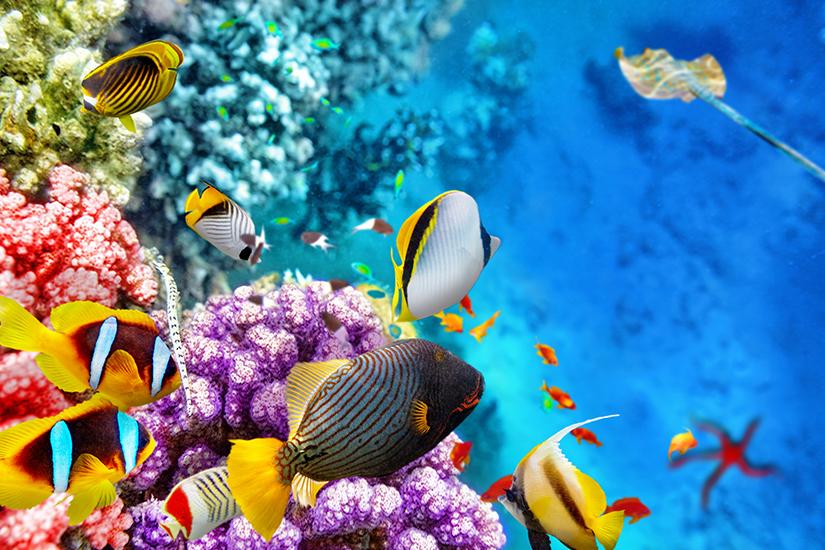 Bunte Unterwasserwelt im Roten Meer