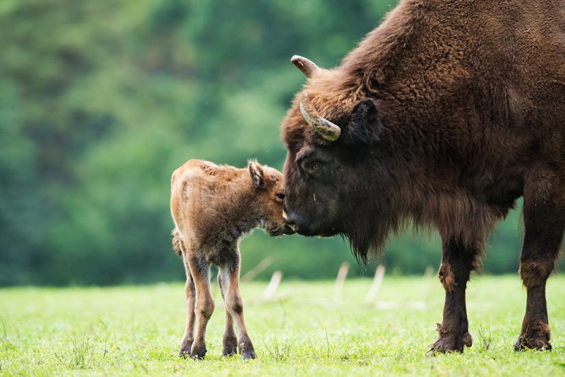 Tiere im Wildpark Bad Marienberg