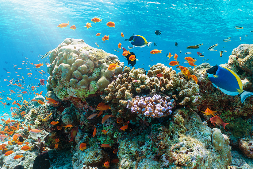 Korallenriff im Indischen Ozean