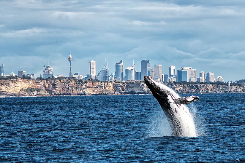 Whale Watching vor Sydney