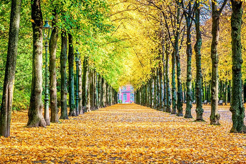 Allee im Duesseldorfer Hofgarten