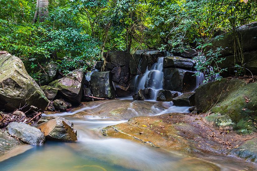 Dschungel auf Koh Phangan